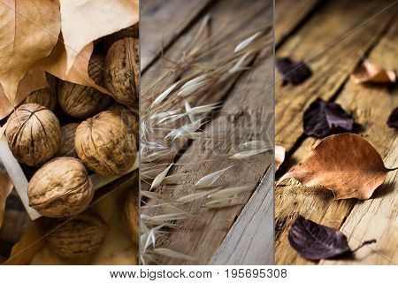 Photo collage autumn fall dry brown red orange leaves walnuts plants on weathered wood background tranquil cozy atmosphere
