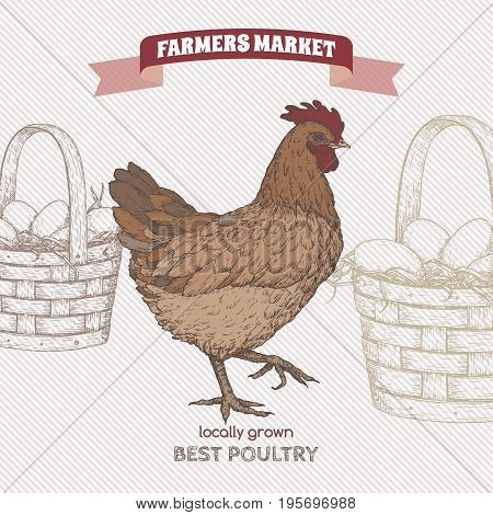 Farmers market label with color live chicken and egg basket. Includes hand drawn elements.