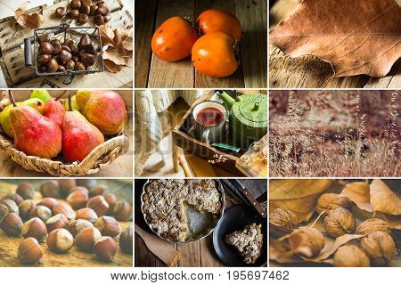 Photo collage nine square images autumn fall hazelnuts walnuts persimmons pears chestnuts apple pie fruit tea book dry leaves cozy atmosphere