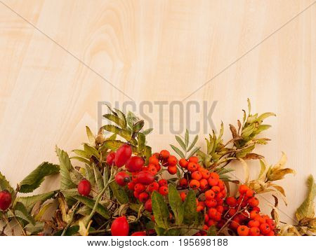 Autumn background from wild rose with hips and rowanberries on wooden base