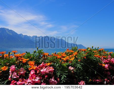 Beauty colorful flowers on promenade in MONTREUX city at Lake Geneva in SWITZERLAND with panoramic view on swiss alpine mountains range and clear blue sky in 2017 warm sunny summer day, Europe on July.