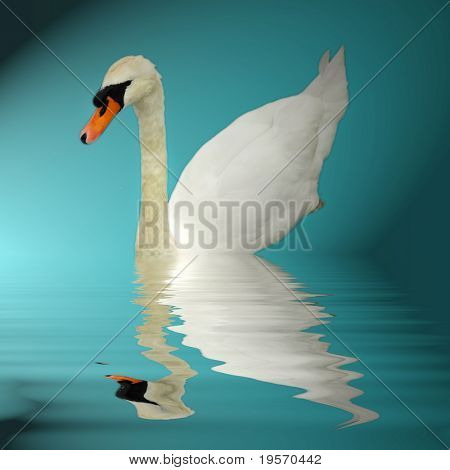 beautiful swan swimming gracefully and reflected in still pond... poster