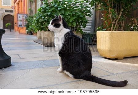 Funny black and white cat sit on narrow street in Sisteron city Alpes de Haute Provence France