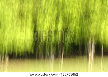 Abstract panning view of forest. View of a woodland area using an abstract photography technique