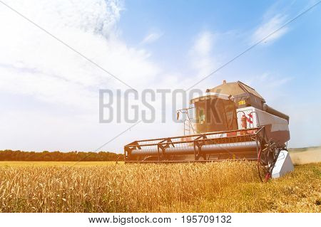 The work of a combine harvester on a golden wheat field on a sunny day against a blue sky
