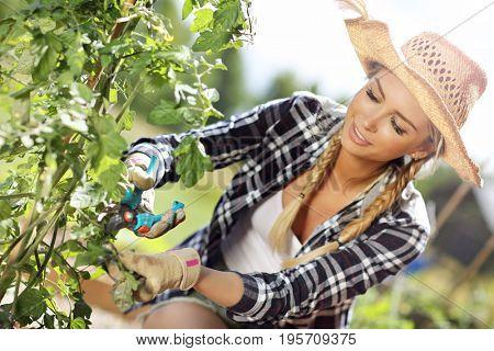 Adult woman using garden shears in vegetable garden