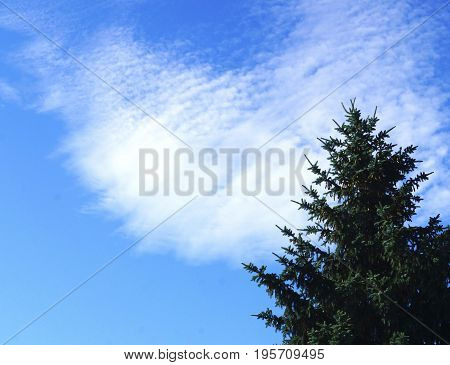 The floating white cloud perfectly fits with the spruce and complements the picture