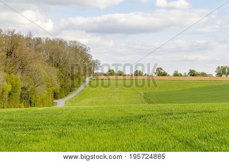 sunny woodside scenery at spring time in Southern Germany