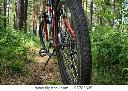Walking in the forest by bike. Travel, tourism, sports, recreation.