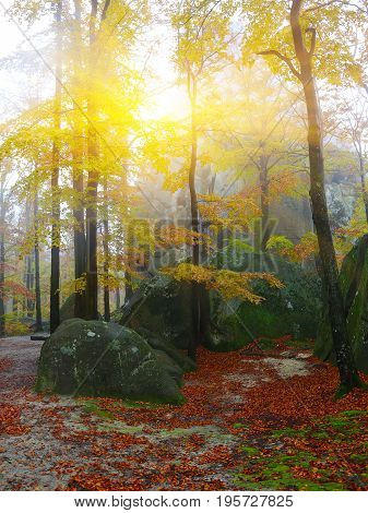 Autumn forest in the mountains. Fallen leaves