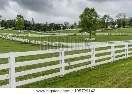 Horse Paddocks with White Fences on overcast day