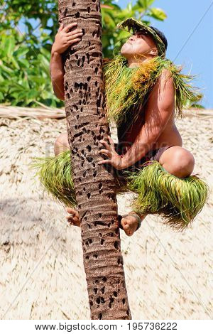 Honolulu Hawaii - May 27 2016:A Samoan man demonstrates how to climb a coconut tree at the Polynesian Cultural Center.