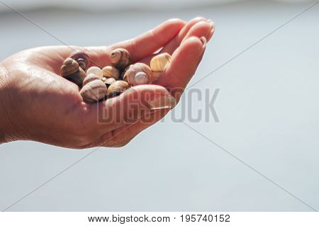 Empty snail shell in hand. Skew shells in woman's hand. Colorful abandoned snail shell