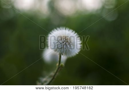 Spring wild flower with bokeh and lights background