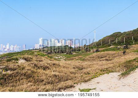 Coastal Dune Vegetation Agains Blue Sky And City Skyline