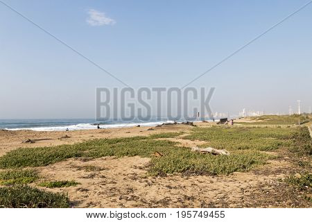 Coastal landscape of dune vegetation beach and ocean against blue sky and distant Durban city skyline in South Africa