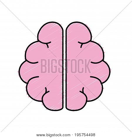 anatomy brain to imagination and memory inspiration vector illustration