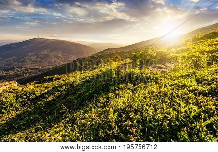 grassy meadow on hillside of mountain ridge on a beautiful sunny summer sunset. wonderful Carpathian landscape