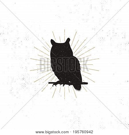 Owl silhouette shape isolated on white background. Black animal icon. Solid template with sunbursts. Stock vector isolated
