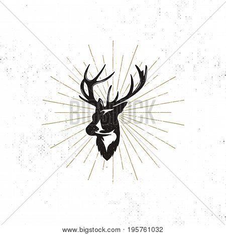 Hand drawn deer s head label. Vintage black silhouette of Deer head with antlers, sunbursts isolated on white background. Wild animal shape design. Stamp Illustration.