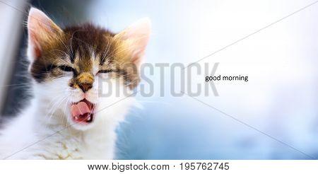 Sleepy cat; The cute sleepy face of a kitten