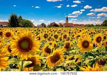 Medjimurje Region Landscape And Sunflower Field View