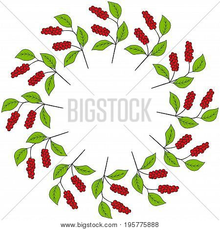 Branch with berries of Chinese Schisandra, in color, isolated on white. One of the best adaptogen herbs for stress relief. Decorative border, round frame, template.