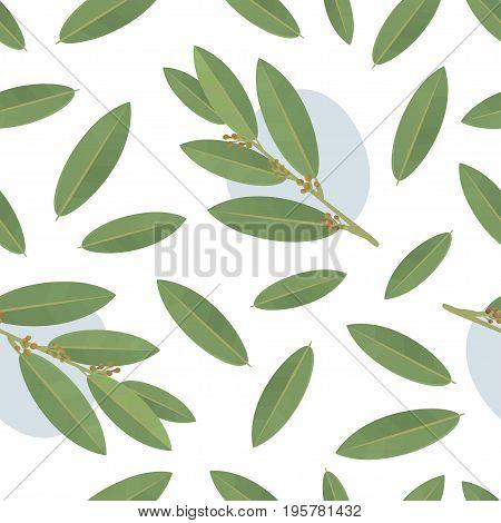 bay leaf seamless vector pattern. Food background.