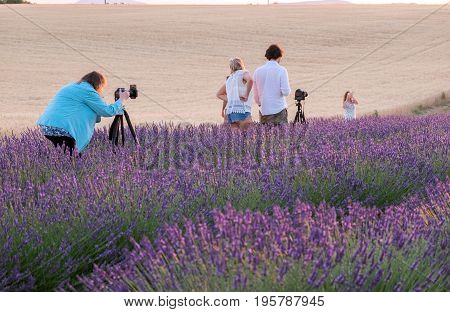Lot of photographers waiting for sunset at lavender fields in Provence. France