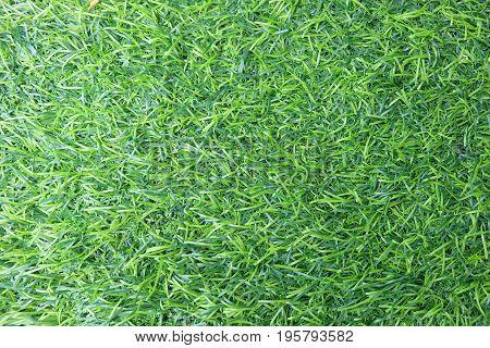 green surface of grass background, green sward wallpaper