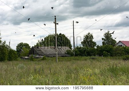 countryside birds crows fly over the meadow roof pillars