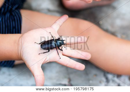 Beetle in the child's hand in the garden