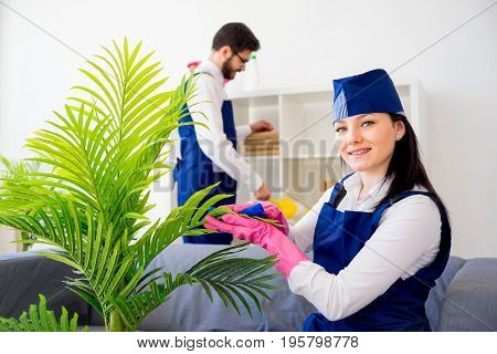 Cleaning service team vaccuuming, dusting and watering plants
