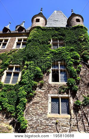 Ivy growing on the walls of Castle Reichsburg.