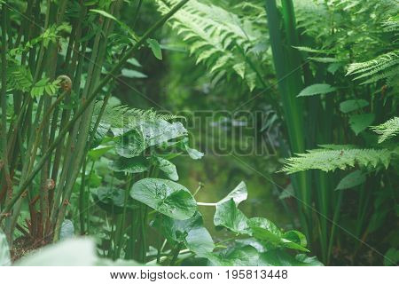 Lush Green Leaves And Plants Creating Tranquil Atmosphere In Isabella Plantation