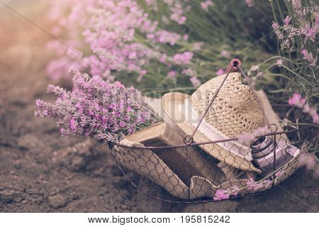 Basket With Lavender Bouquet, Old Antique Camera And Ball With Twine. Lavender Flowers