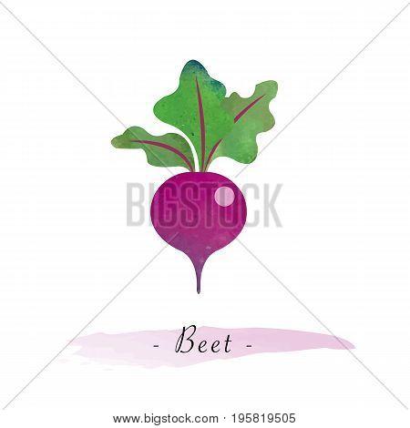 Colorful Watercolor Texture Vector Healthy Vegetable Beet