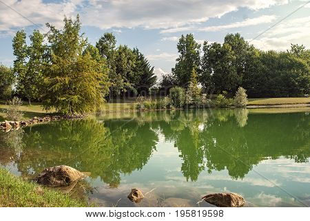 Reflection of pine tree in a lake