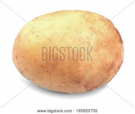 Close-up of raw, organic, healthy and new potato, isolated on a white background. New harvest. Vegetables full of vitamins. Single potato.