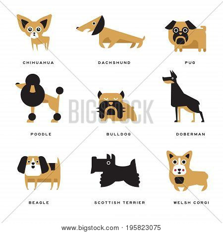Different dogs breeds characters set of vector Illustrations and lettering breed in English on a white background
