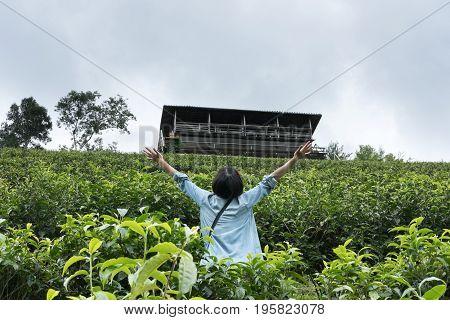 Asian Woman Raise Her Hand In Tea Farm. Tea Plantation. Fresh Green And White Tea Leaves. Agricultur