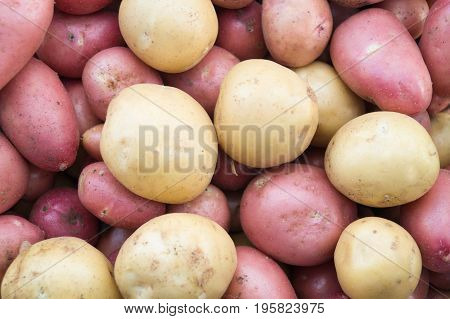 Beige and pink potatoes background. Heap of potato root. Close-up potatoes texture