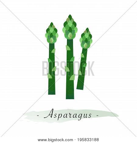 Colorful Watercolor Texture Vector Healthy Vegetable Asparagus