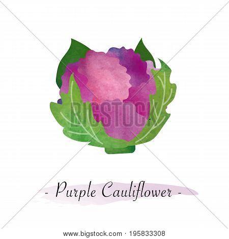 Colorful Watercolor Texture Vector Healthy Vegetable Purple Cauliflower