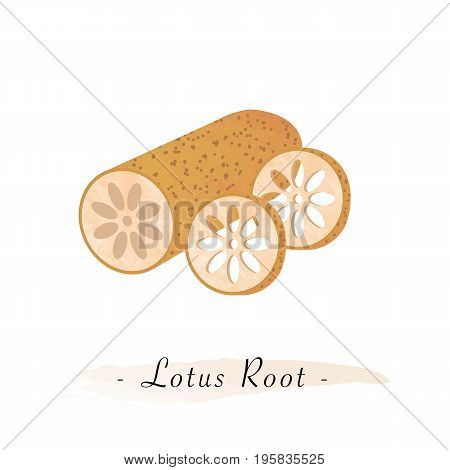 Colorful Watercolor Texture Vector Healthy Vegetable Lotus Root