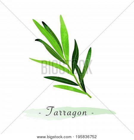 Colorful Watercolor Texture Vector Healthy Vegetable Tarragon