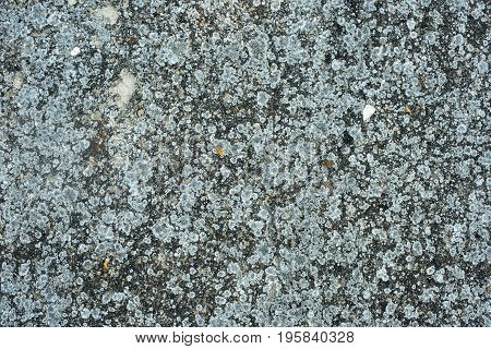 old concrete, cement lichen texture background photo