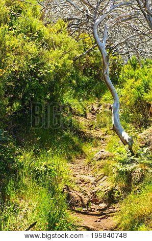 Path In The Mountains On The Route Pico Ruivo - Encumeada, Madeira Island, Portugal.