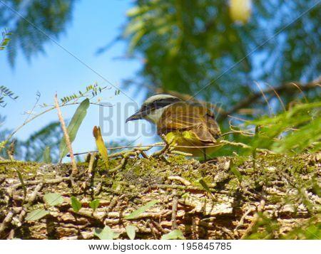 Wildlife. Bird's back. Bird standing over a tree. Outdoor