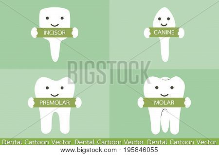 Tooth Type - Incisor, Canine, Premolar, Molar
